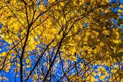 10月蓝色4 图库摄影