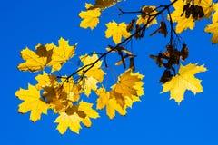 10月蓝色2 库存图片