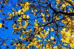 10月蓝色3 免版税库存图片