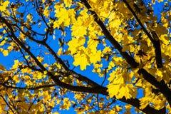10月蓝色9 库存照片