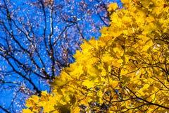 10月蓝色12 库存图片