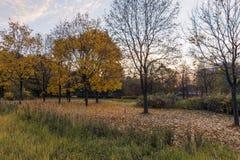 10月赤裸树 库存图片