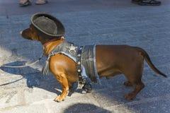 3月达克斯猎犬 免版税图库摄影