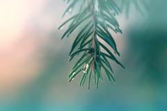 12月雨下落 免版税库存图片