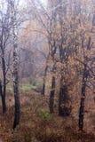 11月雨在俄国森林里 免版税图库摄影