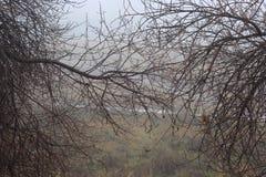 11月雨在俄国森林里 库存图片