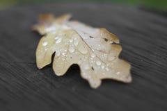 11月雨 免版税库存图片