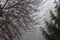 11月雨 库存图片