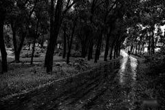 11月雨 免版税图库摄影