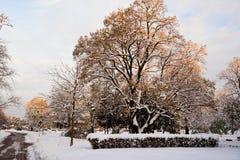 11月雪在城市公园 免版税库存照片