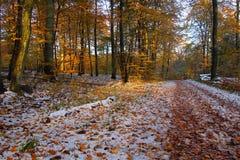 11月雪在森林 免版税图库摄影
