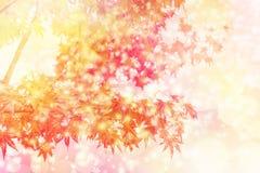 11月雪概念 秋叶和雪剥落作用背景 免版税图库摄影
