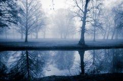11月雾树 库存照片