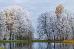 10月霜在Trigorskoye 普希金山 俄国 图库摄影