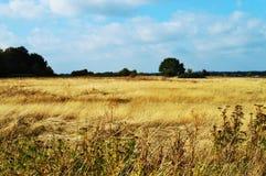 10月风景,在荷兰,欧洲 免版税库存图片