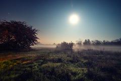 满月,在薄雾覆盖的森林的夜视图 免版税库存照片