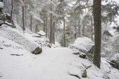 12月,多雪的杉木美好的风景与雾, N口岸的  免版税库存照片