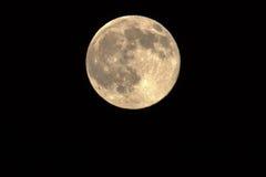 满月,蜂蜜月亮 免版税库存图片