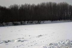 2月结冰的河Borcea 免版税图库摄影