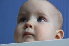 11月婴孩的画象 库存照片