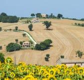 3月(意大利) :夏天风景 库存照片