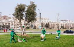 2017年3月15日海滨公园,巴库,阿塞拜疆 从事园艺在城市公园的花匠产物 免版税图库摄影