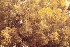2017年7月21日的DUBAI-UNITED阿拉伯酋长管辖区 与黄色树荫叶子的绿色 植物叶子的自然样式  免版税图库摄影