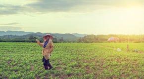 2015年10月21日的Phayao 农夫在与剧烈的天空的一个土豆领域工作 库存照片