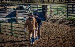 2017年4月22日,里奇韦科罗拉多:在烙记交换的牛期间的美国牛仔在百年大农场措辞,里奇韦,科罗拉多 图库摄影
