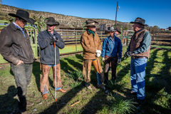 2017年4月22日,里奇韦科罗拉多:大农场所有者文斯Kotny与烙记在百年大农场的牛的牛仔,里奇韦谈话, 库存照片