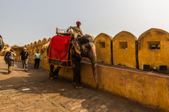 2014年11月04日:在入口的大象对琥珀色的宫殿 图库摄影