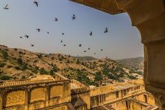 2014年11月04日:飞行在琥珀色的堡垒附近的鸟在斋浦尔, 免版税库存照片
