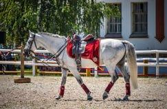 2015年7月25日 克里姆林宫骑术学校的礼仪介绍VDNH的在莫斯科 图库摄影