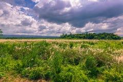 2014年9月03日- Chitwan国家公园,尼泊尔全景  免版税库存图片
