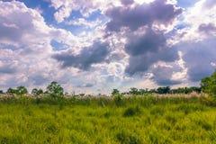 2014年9月03日- Chitwan国家公园,尼泊尔全景  免版税库存照片