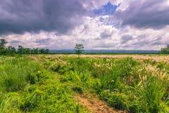 2014年9月03日- Chitwan国家公园,尼泊尔全景  图库摄影