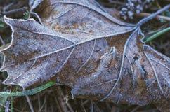 11月 用树冰凉快的秋天盖的秋天叶子 免版税库存图片