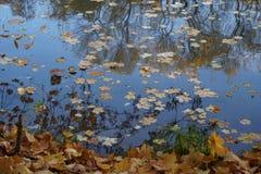 10月 秋天在公园 下落的叶子在河 库存照片