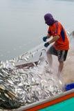 11月5,2016 :在渔夫小船上,抓许多鱼在Bangpakong河嘴Chachengsao省的在泰国东部 库存图片