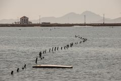 3月Menor的海景在穆尔西亚 免版税库存图片
