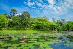 有一个人工湖的美丽的庭院有许多睡莲叶的在水中小游艇船坞海湾沙子位于新加坡 免版税库存照片