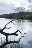 有一个停止的结构树的英国河 免版税库存照片