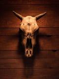 有一个偶蹄动物的动物的垫铁的头骨 免版税库存图片