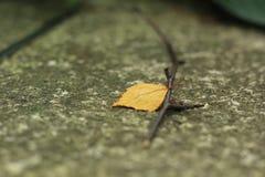 有一个分支的一片黄色叶子在石头 免版税库存照片