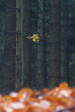 有一个分行的秋天森林在结构树 图库摄影
