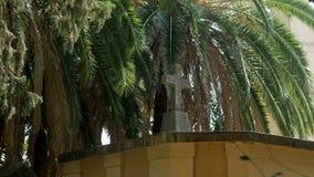 有一个十字架和棕榈树丛的公墓在秋天 影视素材