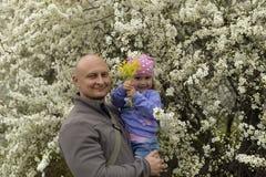 有一个小女儿的爸爸她的站立在开花的树附近的胳膊的在春天 免版税库存图片