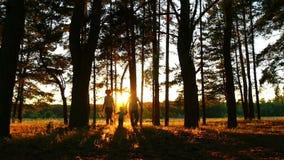 有一个小孩子的一个愉快的家庭跑往照相机 一个男人、妇女和孩子的剪影在森林里日落的 影视素材