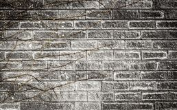 有一个干藤的分支的老灰色砖墙有镇压特写镜头背景 库存图片