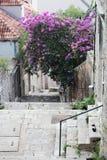 有一个楼梯的一条狭窄的街道在老镇,杜布罗夫尼克 免版税库存图片